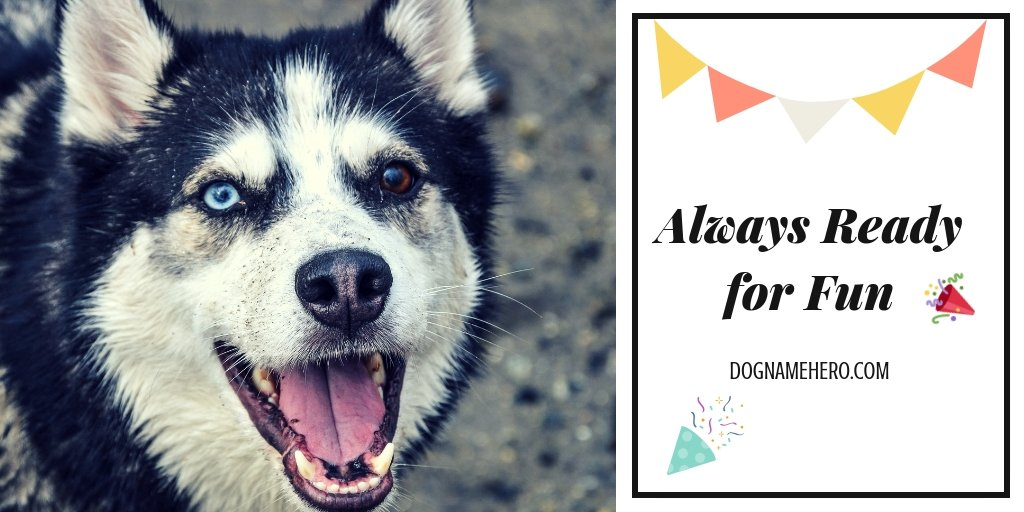Best Husky Names - 130 Dog Names for Huskies [Infographic]