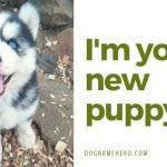 Husky dog names