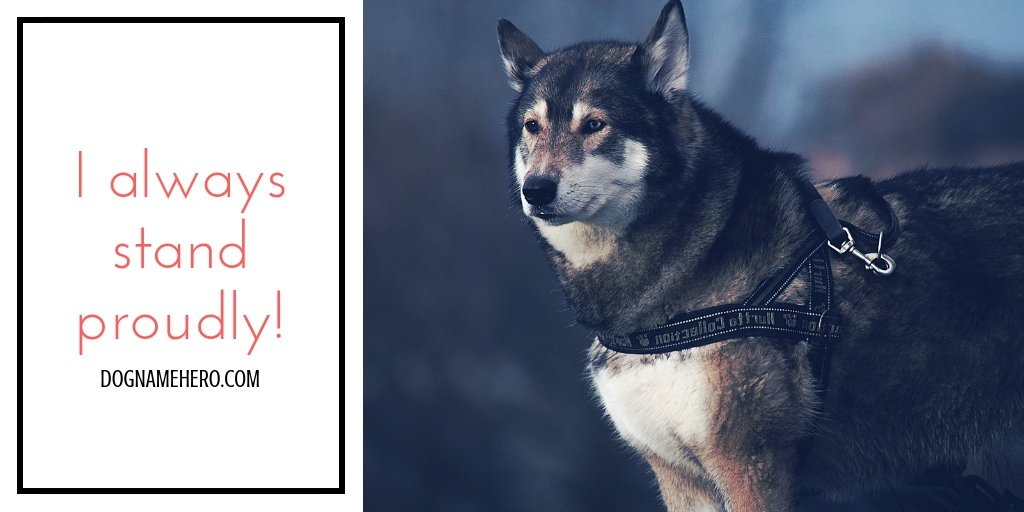 Husky Names - 130 Best Dog Names for Huskies [Infographic]