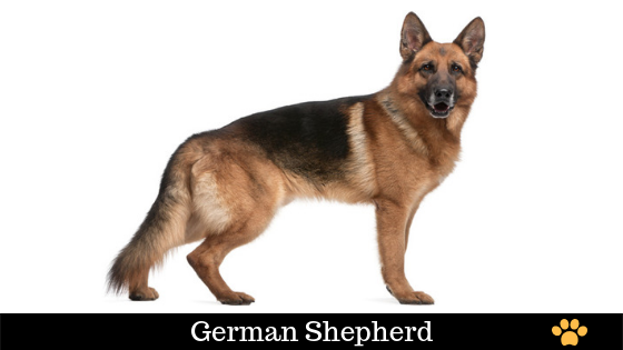 German dog names