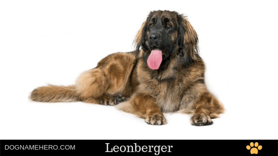German dog names with meaning