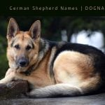 German Shepherd Names