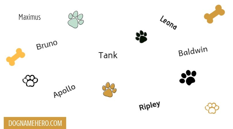 German Shepherd Names for Your Dog