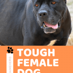 Tough dog names female