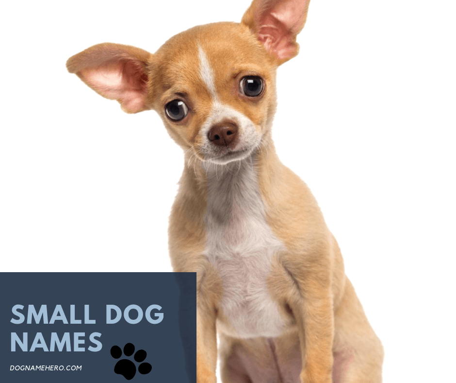 Cutest Small Dog Names