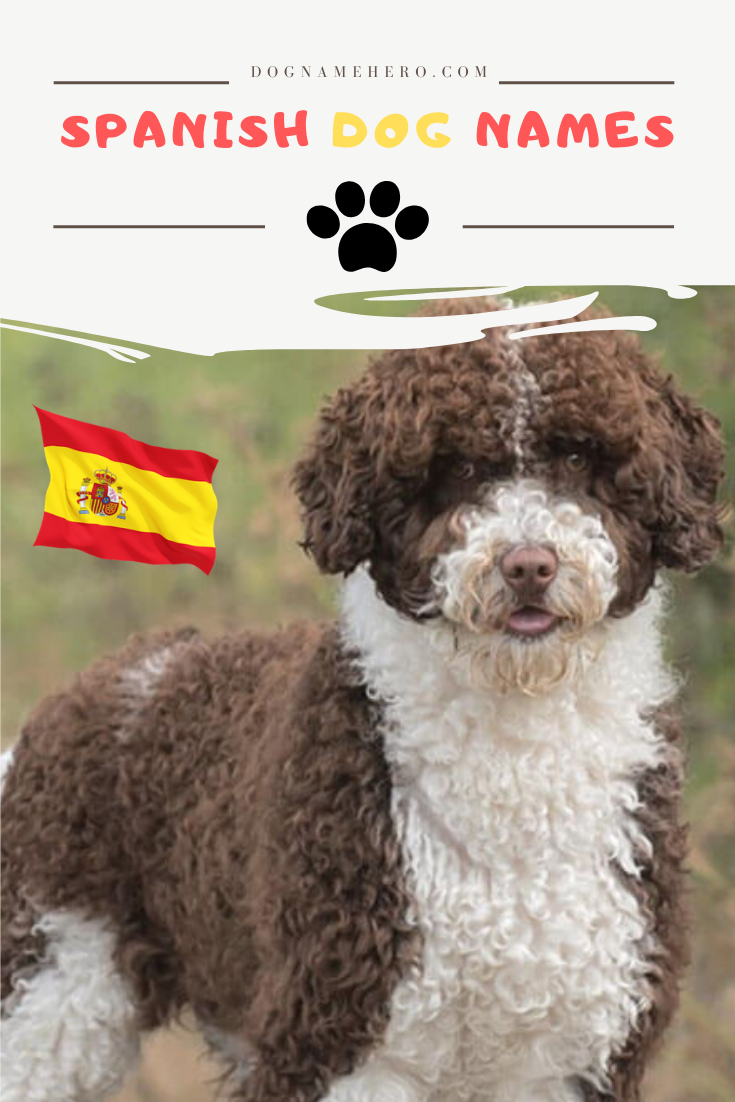 Spanish Dog Names with meanings