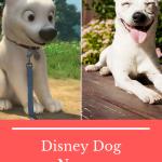 All Disney Dog Names