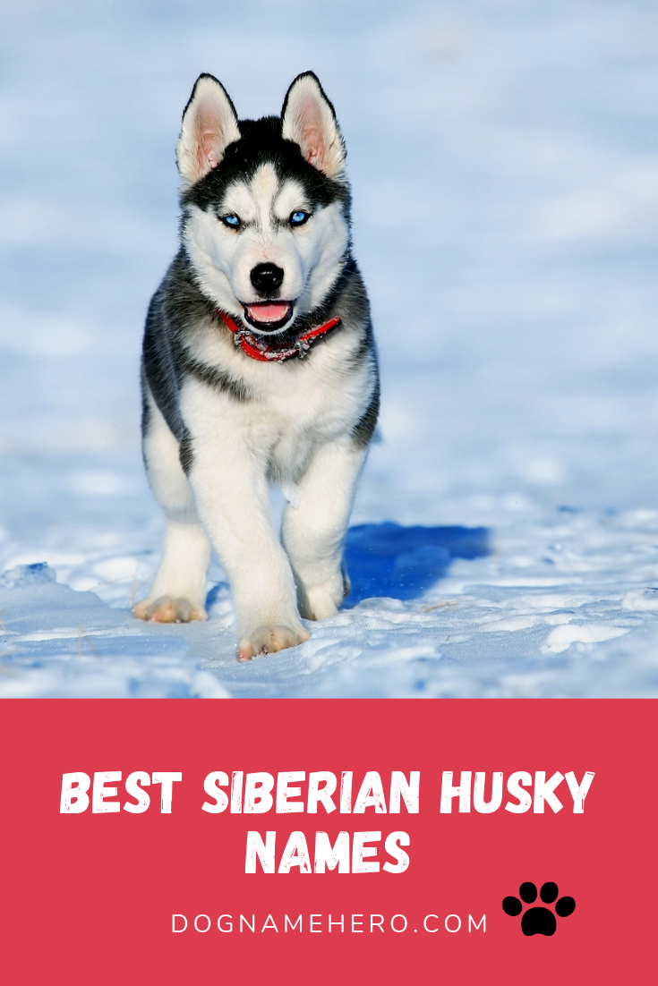 Best Husky Names