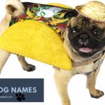 Food Dog Names