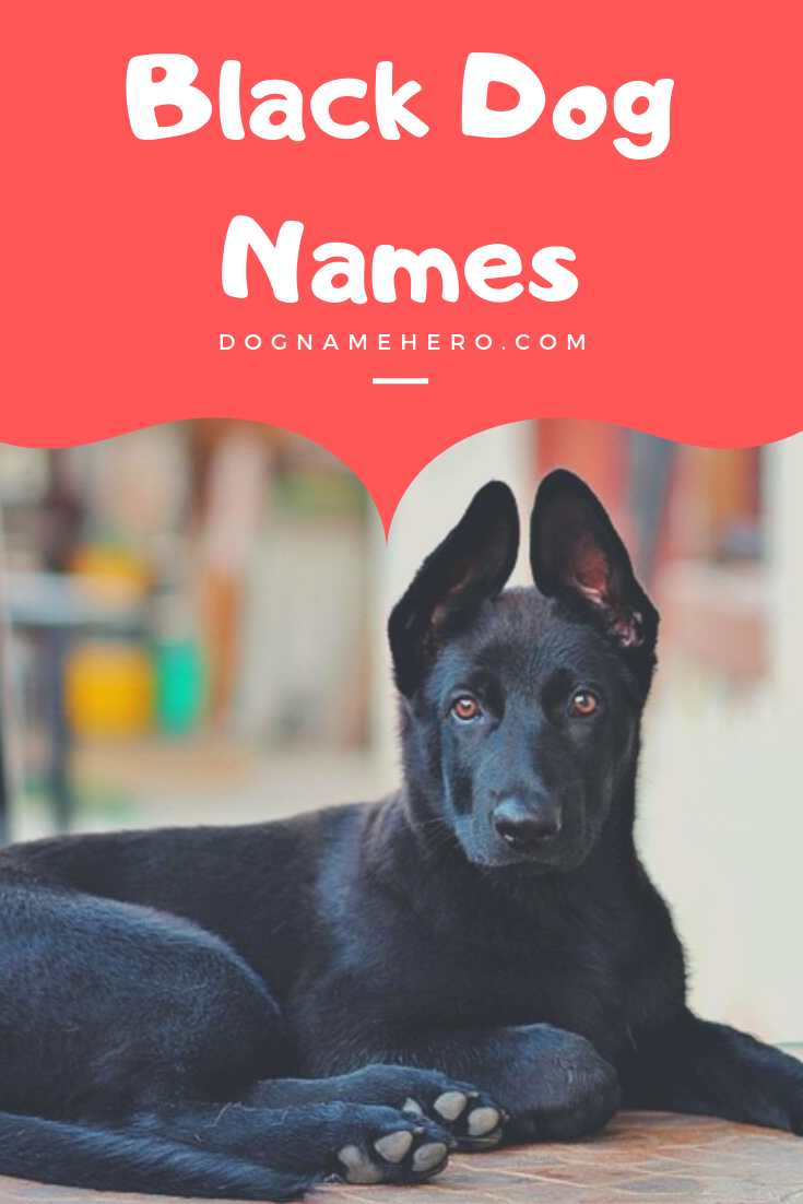 100+ Ultimate Black Dog Names That Are Just Perfect