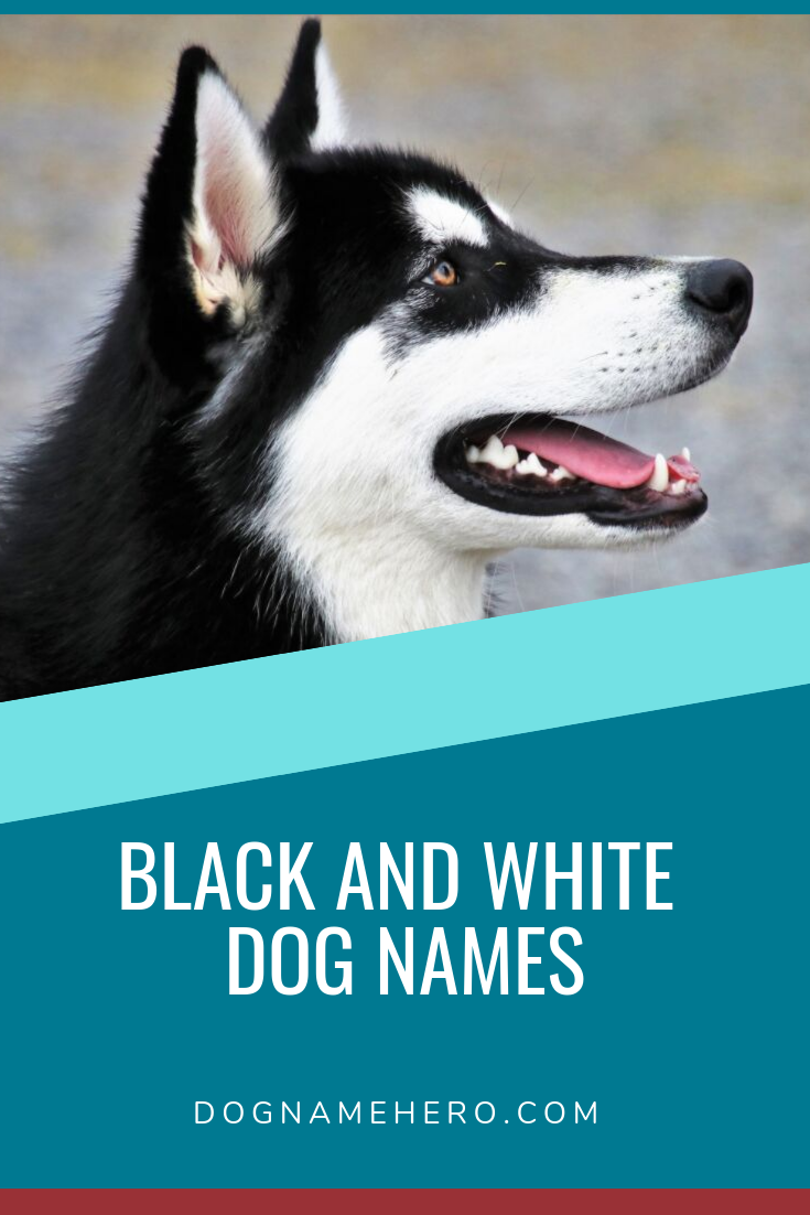Black and White Dog Names