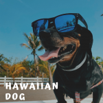 Hawaiian Dog Names