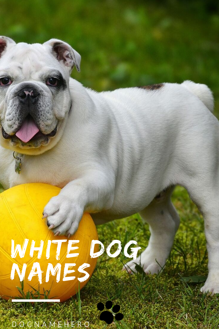 White Dog Names