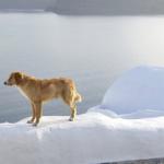 Greek Dog Names