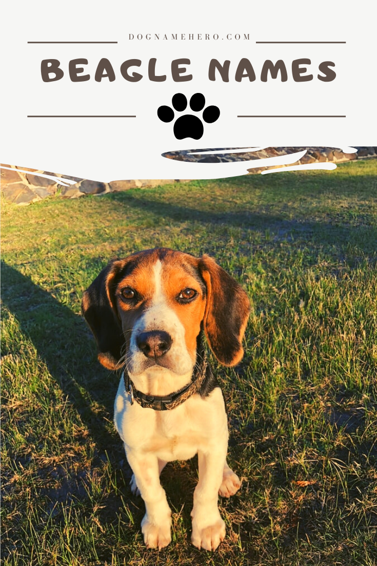 450 Most Unique Dog Names For Unique Puppies Dog Name Hero