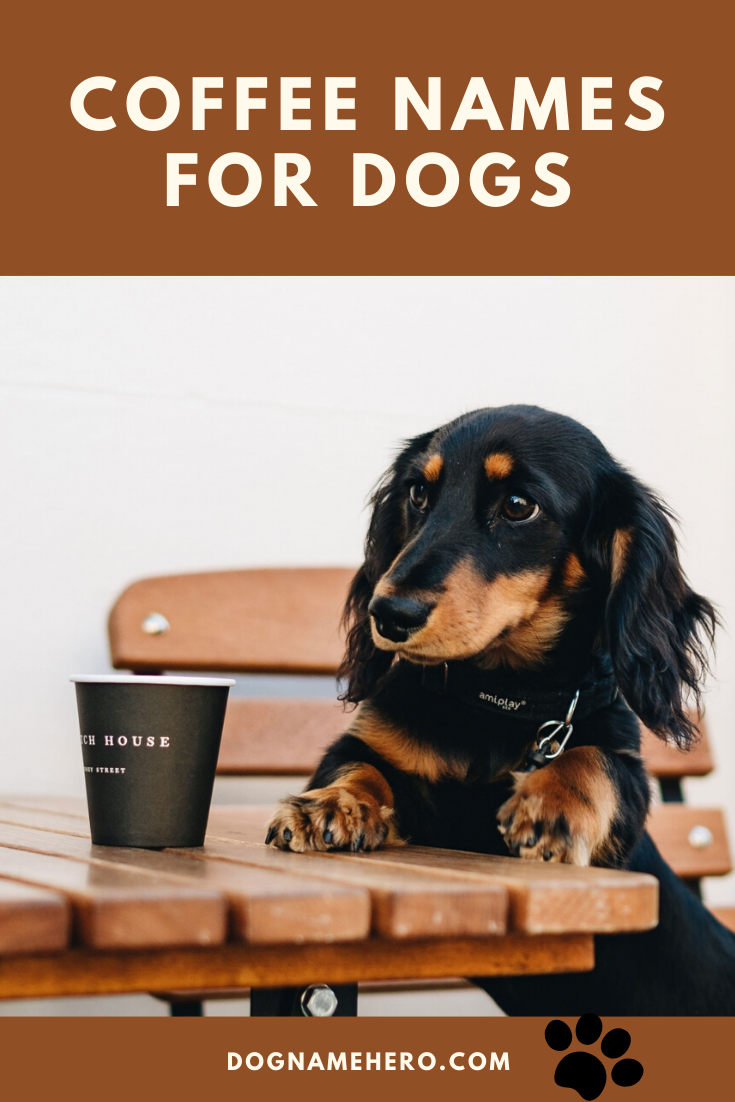 Coffee names for dogs