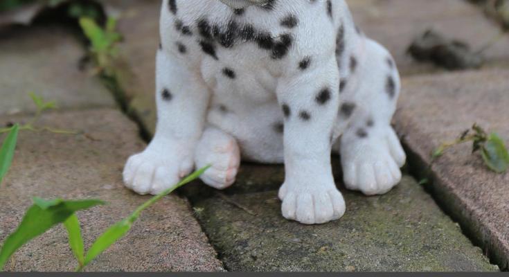 101 Dalmatian Dog Names
