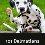 101 Dalmatians Dog Names