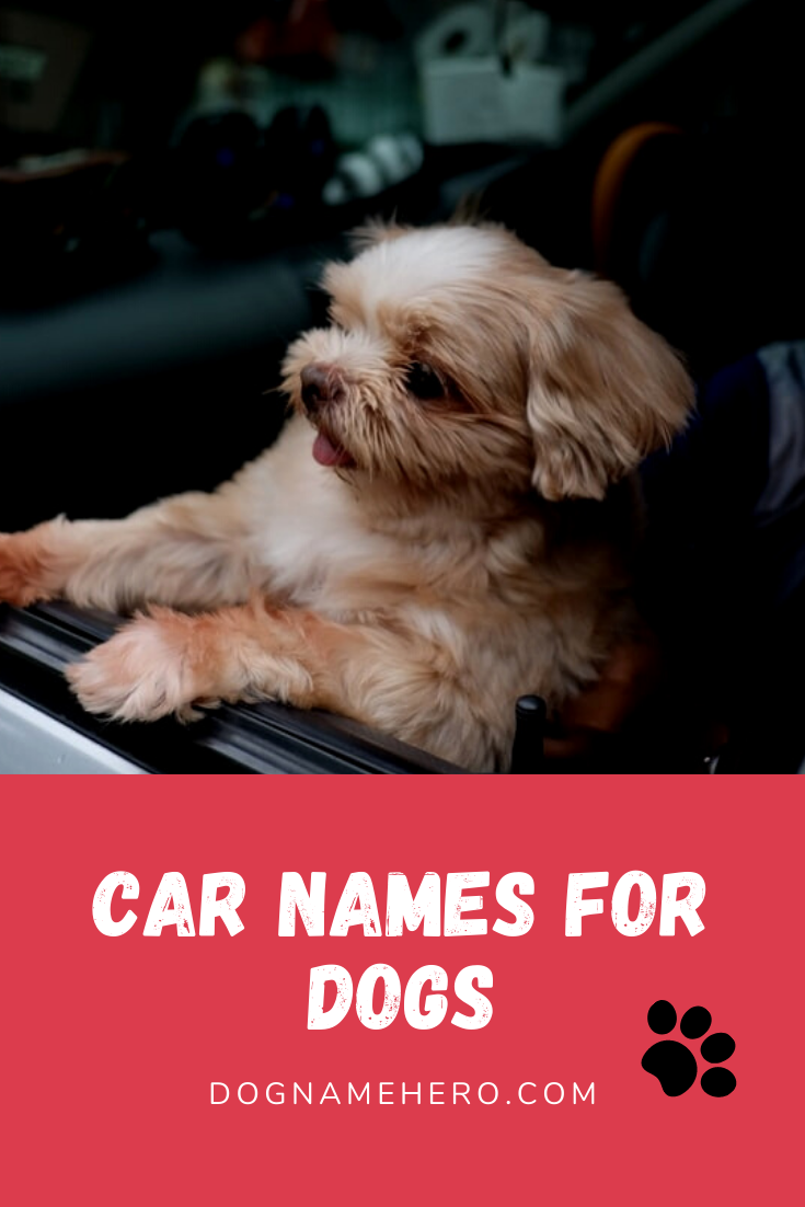 Car Dog Names