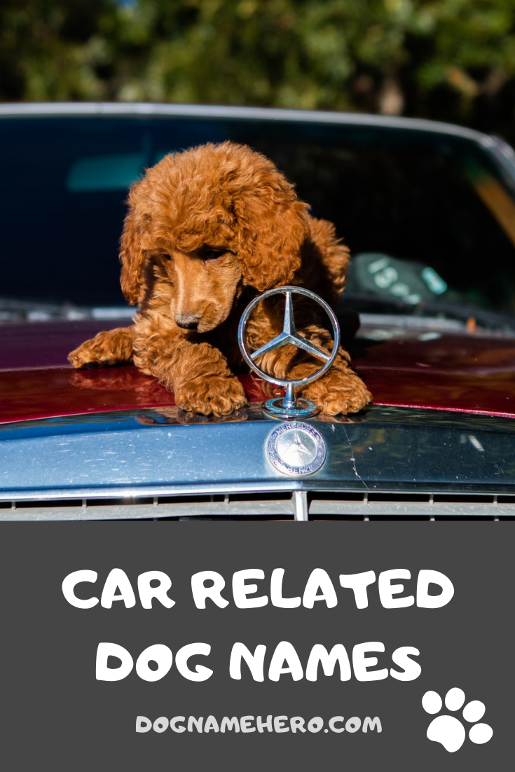 Car Related Dog Names