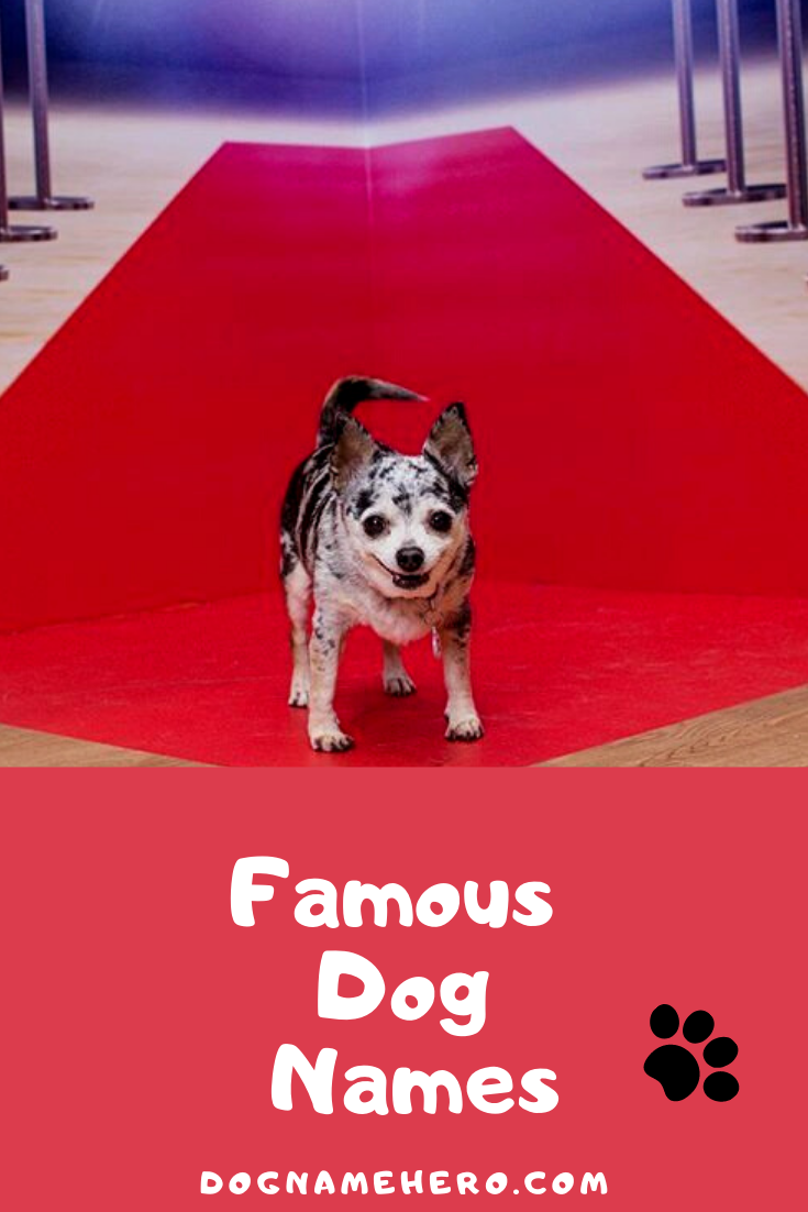 Famous Dog Names