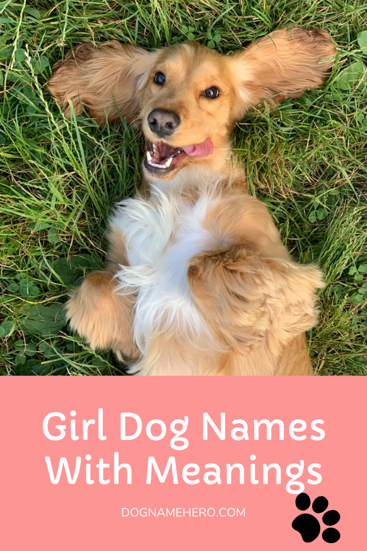 Female Dog Names With Meanings