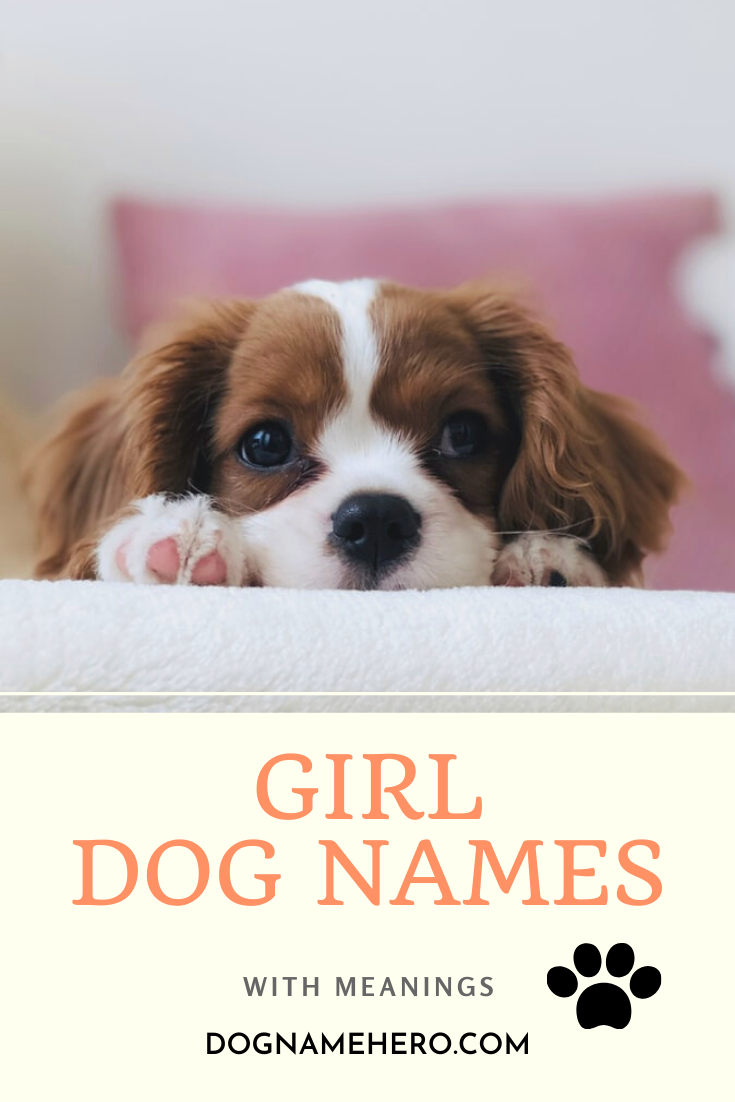 Girl Dog Names With Meanings